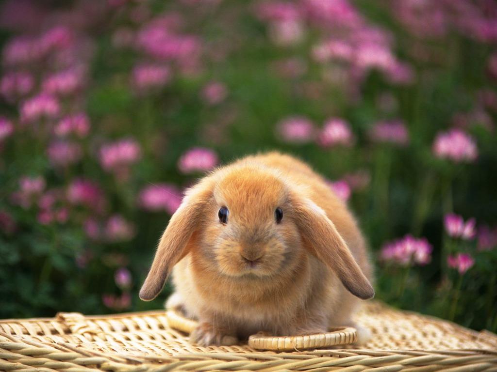 Cute Little Bunny Wallpaper 18 1024x768 Wallpaper