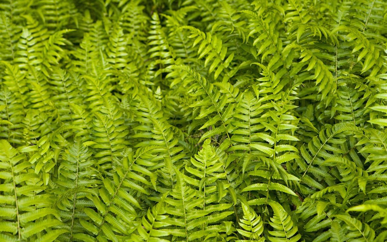 Plantas fondos de color verde hoja 9 1280x800 fondos de - Plantas de hojas verdes ...