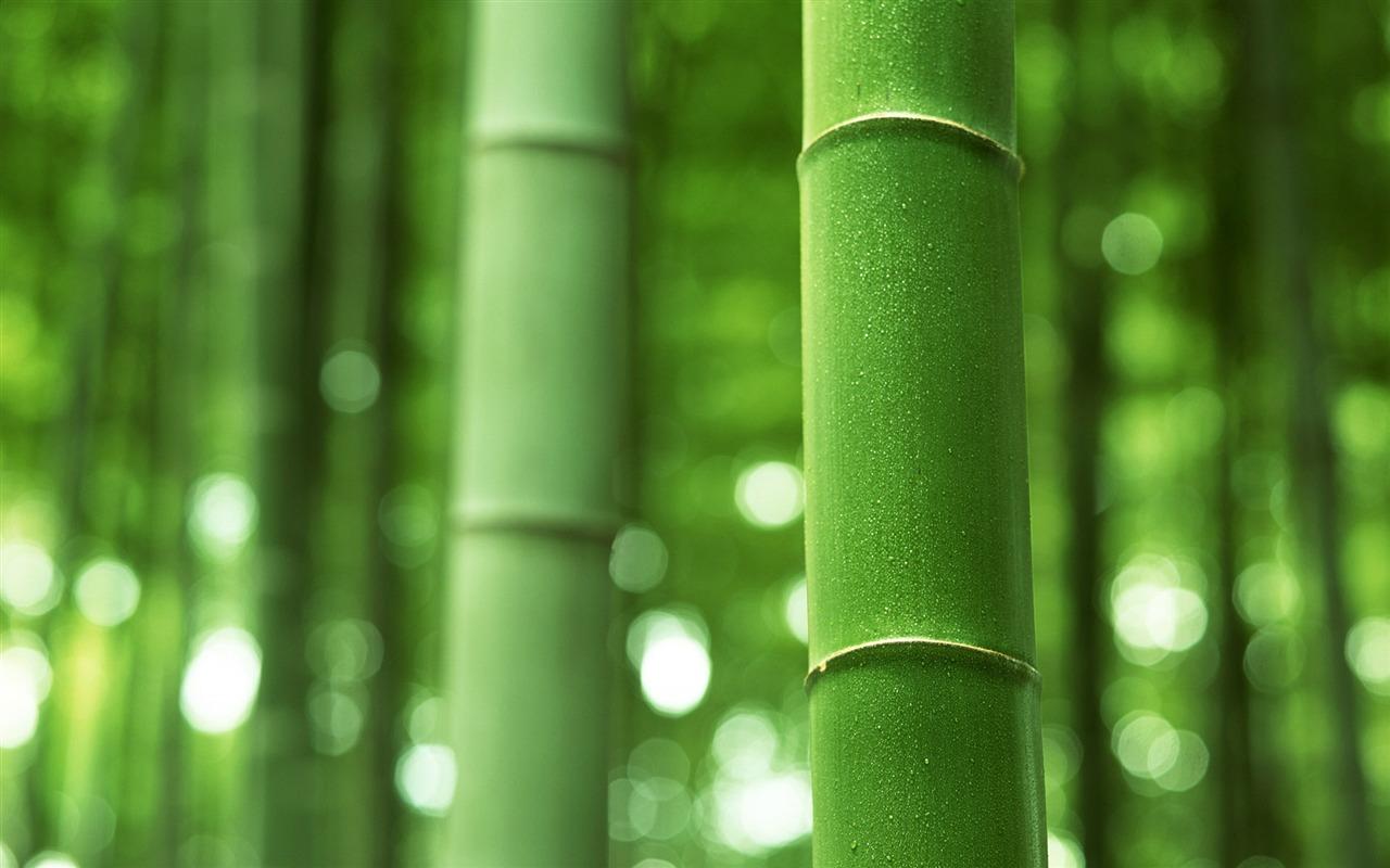 Green bambus tapeten alben 15 1280x800 wallpaper for Green pflanzen