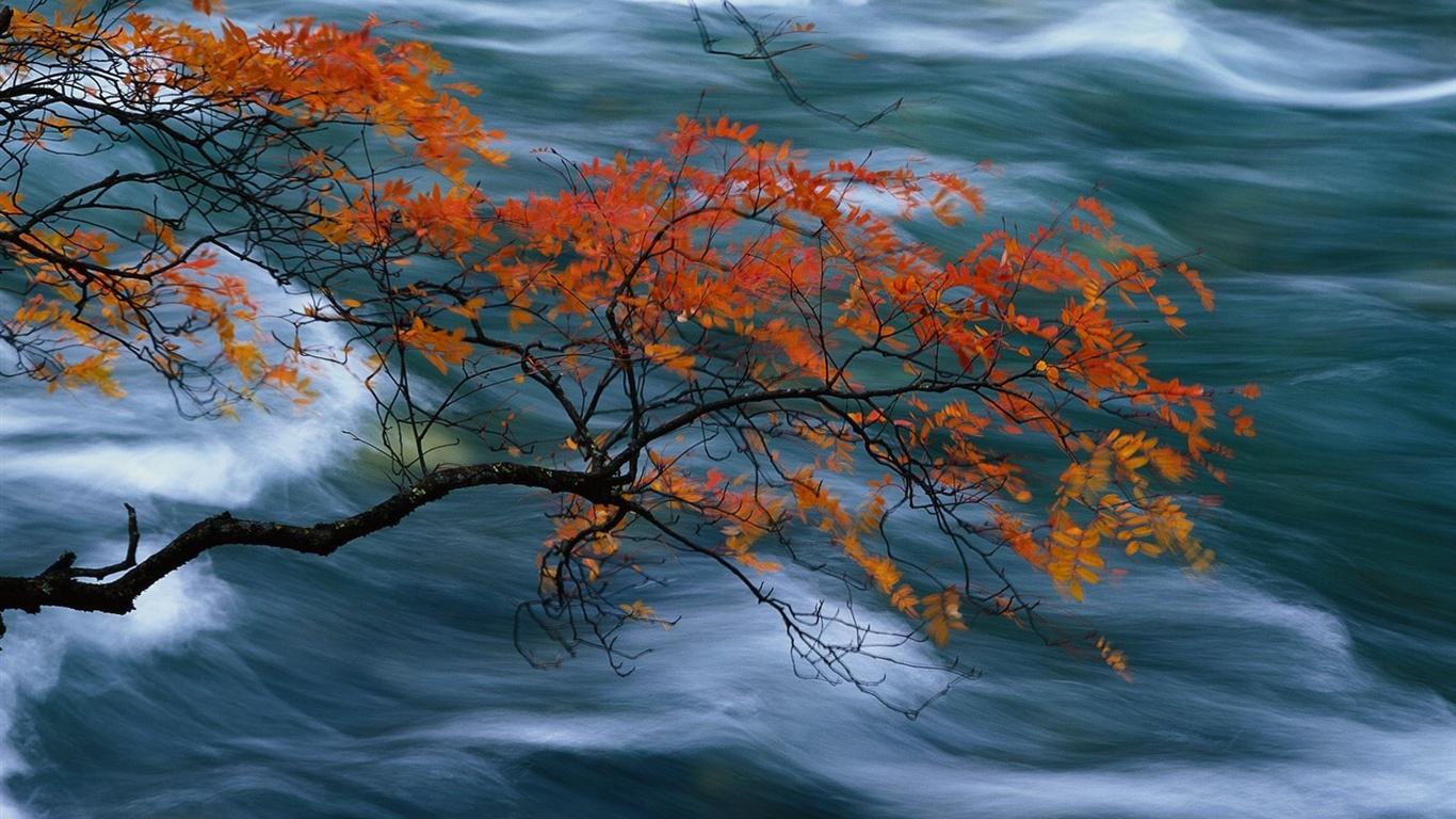 ... Herbst Wald Wallpaper - Pflanzen Hintergrundbilder - V3 Wallpaper Site