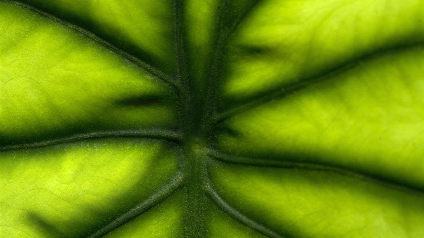 Plantas fondos de color verde hoja 3 1366x768 descarga - Plantas de hojas verdes ...