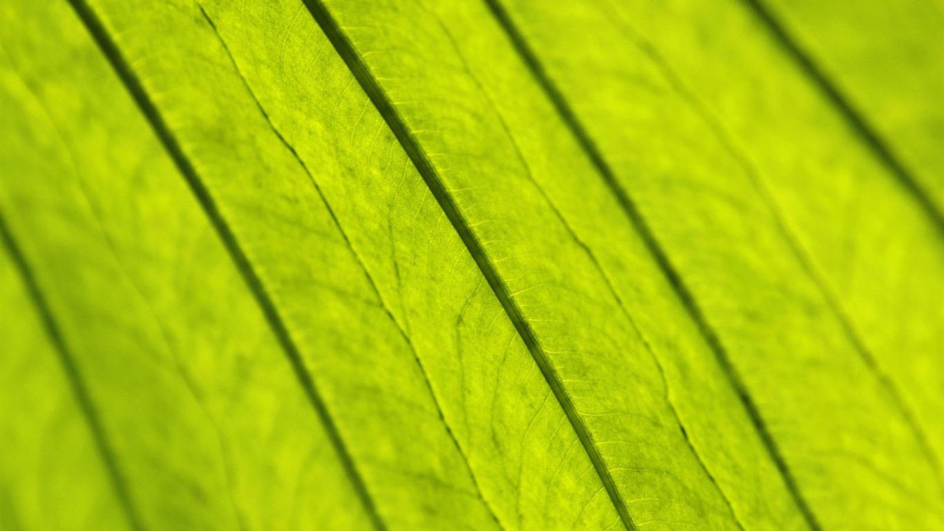 Plantas Fondos De Color Verde Hoja #12
