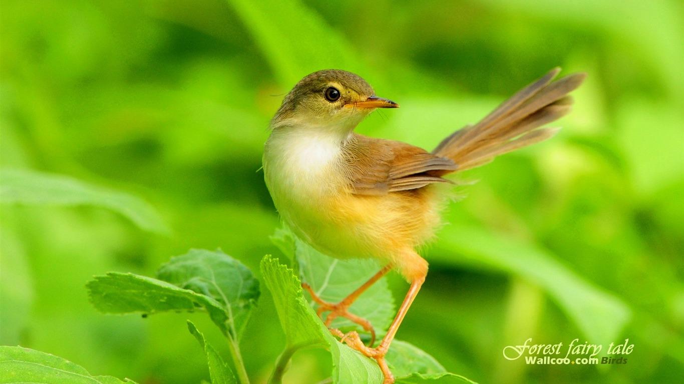 Foto popis krásný jarní ptačí wallpaper 14