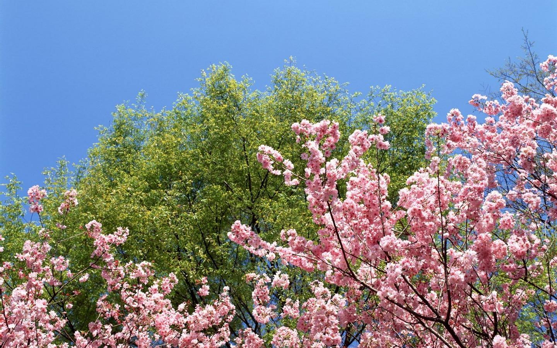 Primavera naturaleza fondos de pantalla 7 1440x900 for Fondo de pantalla primavera