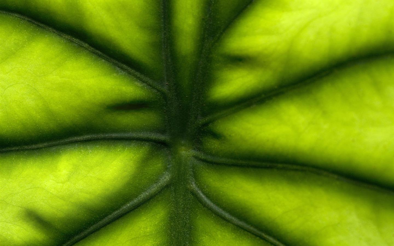 Plantas fondos de color verde hoja 3 1440x900 fondos de - Color verde hoja ...