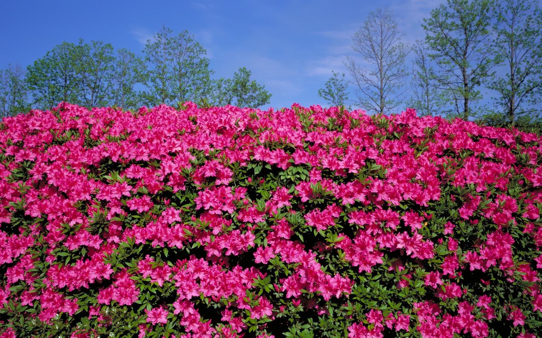 Fonds d 39 cran au paysage japonais 21 1440x900 fond d for Jardin japonais fond d ecran