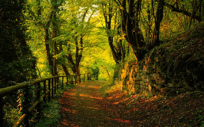 Nueva Zelanda Hd: Nueva Zelanda Naturaleza Fondos (1) #6