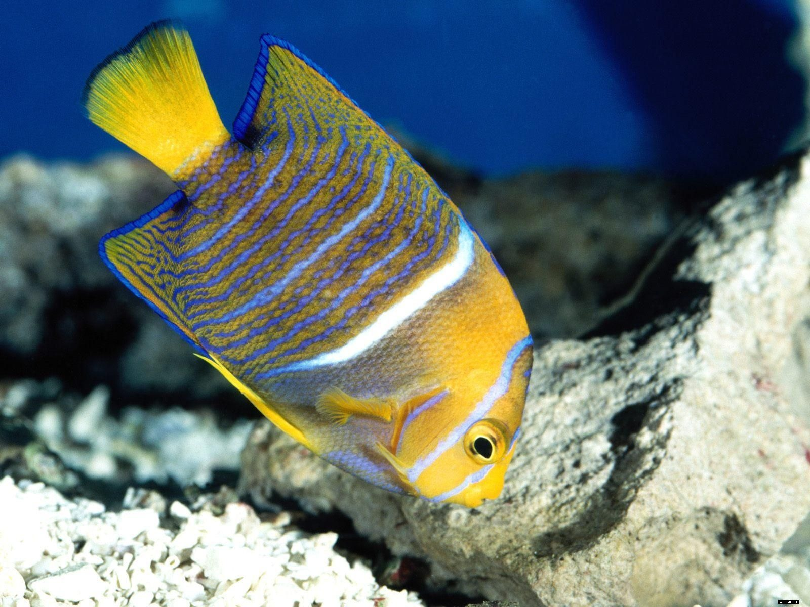 Colorful tropical fish wallpaper albums 4 1600x1200 for Colorful tropical fish