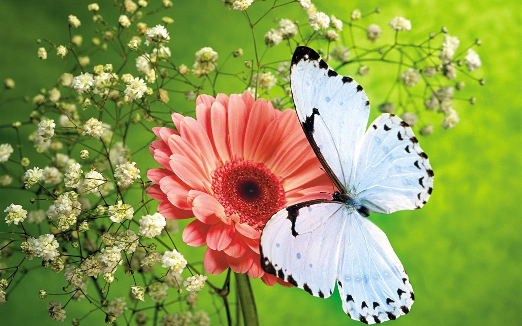 Schmetterlinge Und Blumen Wallpaper Album 1 8 1680x1050