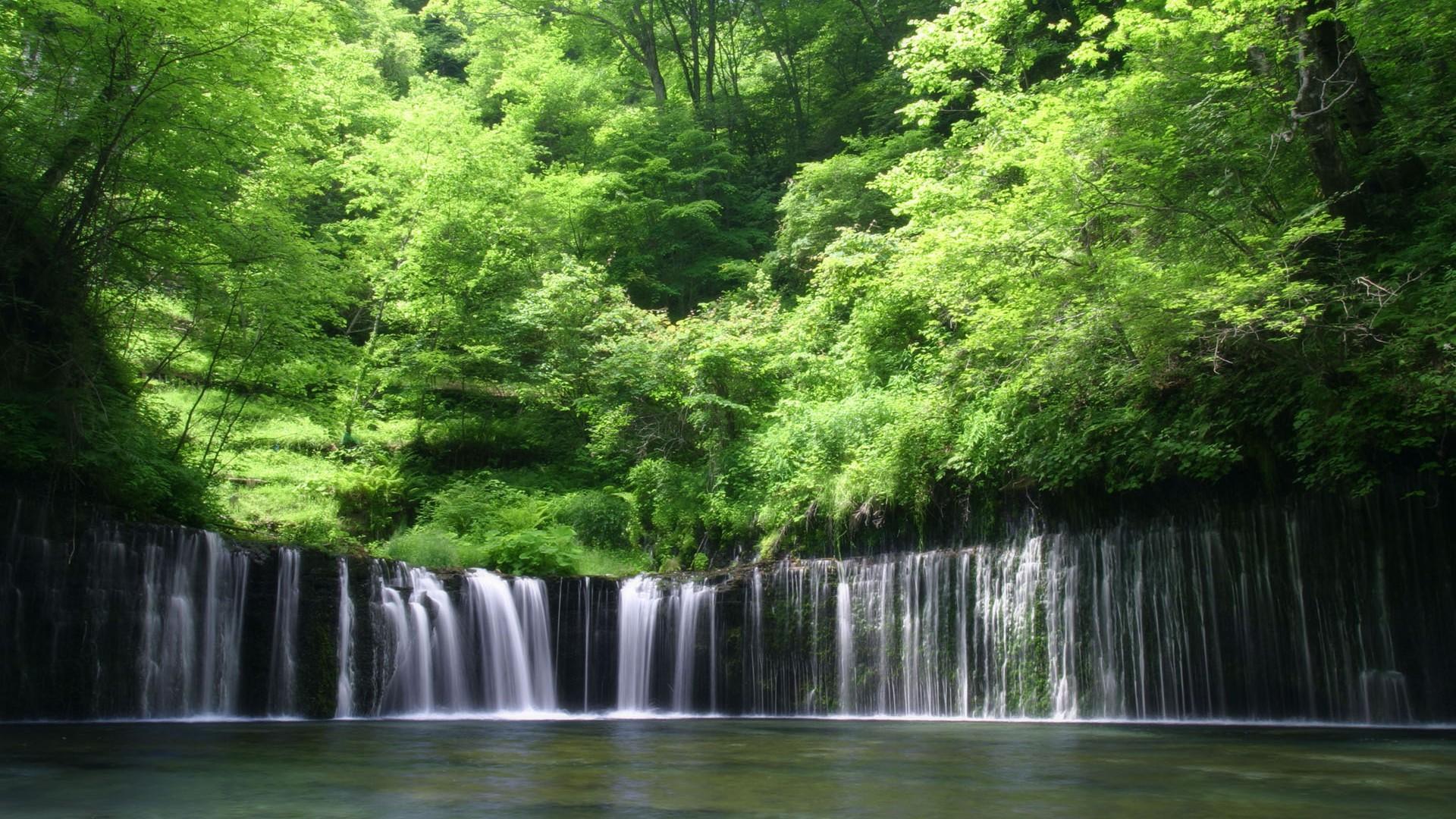 自然の画像 p1_31