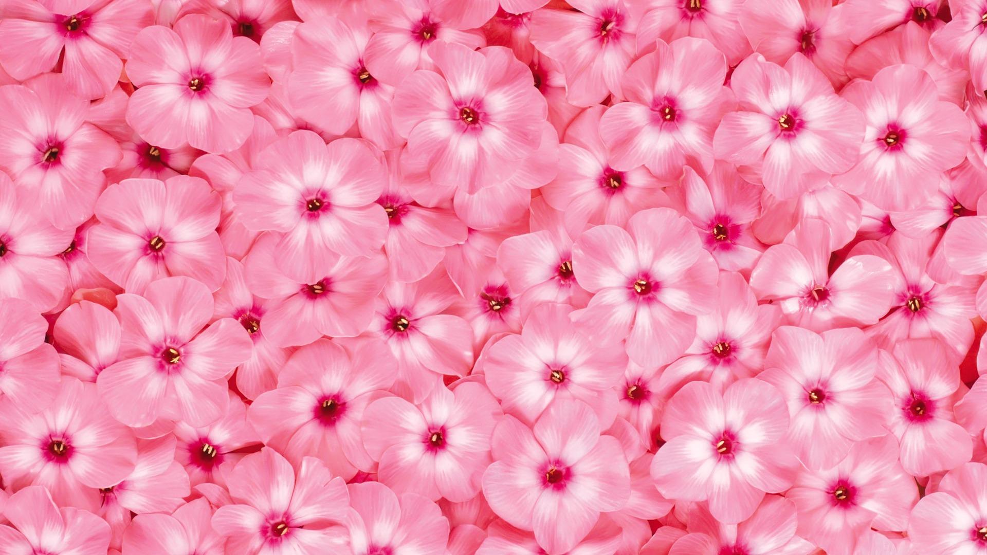 blumen in flowerpix image - photo #29