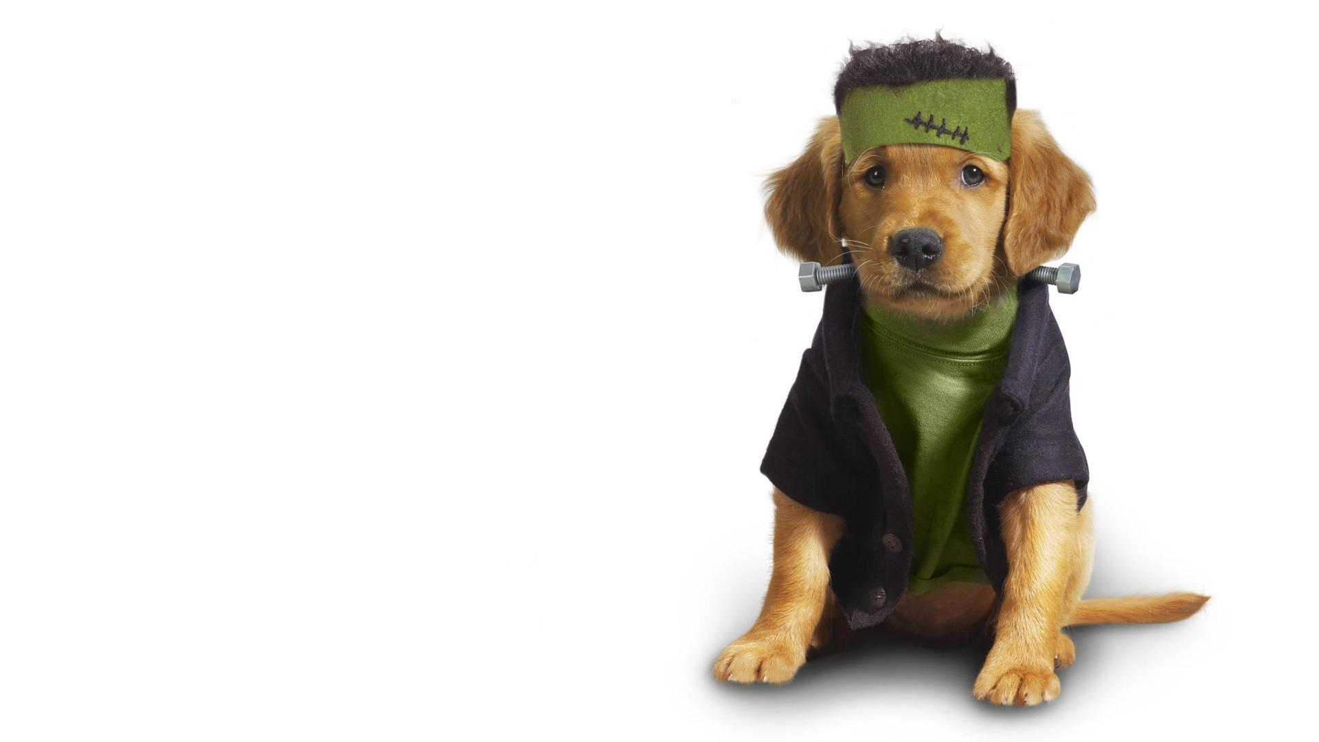 子犬写真のHD壁紙(10) #6 - 1920x1080 壁紙ダウンロード - 子犬写真のHD壁紙(10) - 動物 ... Hd Wallpaper 1920x1080
