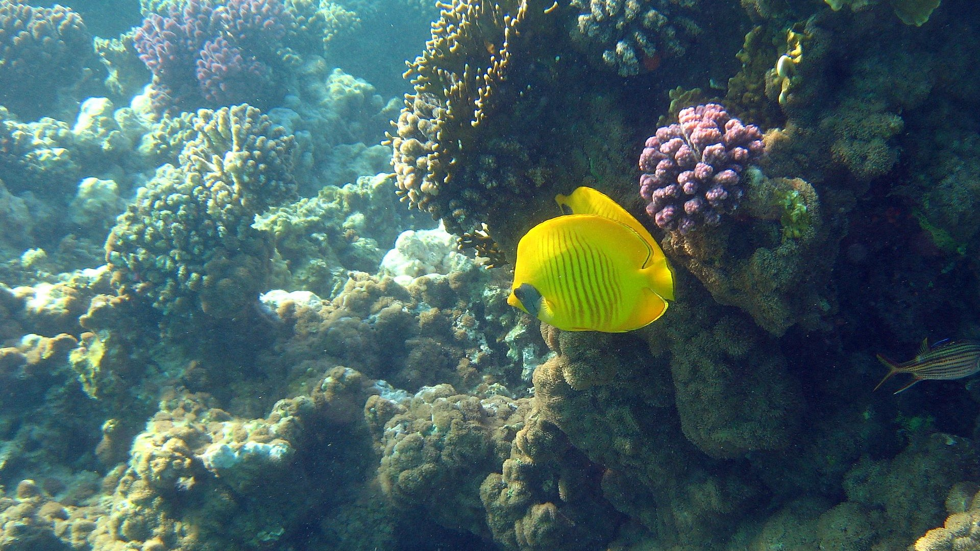 Fun underwater world 4 25 1920x1080 description fun underwater world