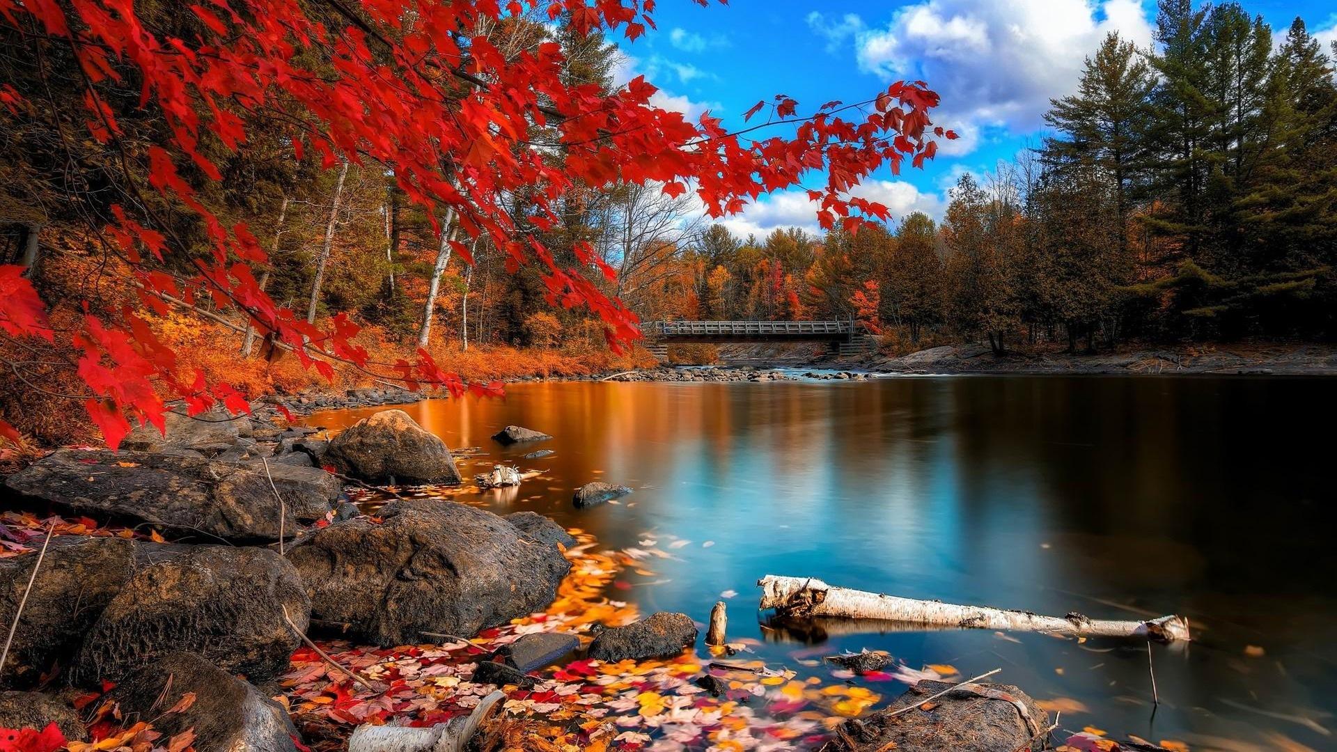 ウィンドウズ8 1テーマのhd壁紙 美しい秋の紅葉 13 19x1080 壁紙ダウンロード ウィンドウズ8 1テーマのhd壁紙 美しい秋の紅葉 システム 壁紙 V3の壁紙