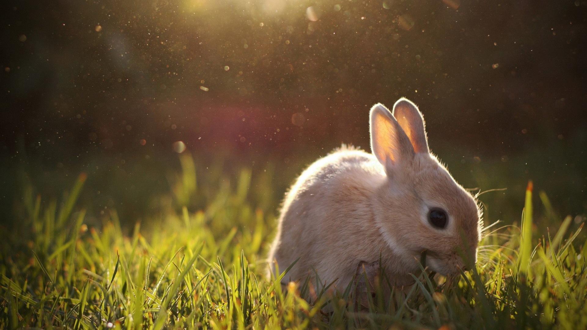 Animaux fourrure mignon fonds d 39 cran lapin hd 10 for Fond ecran animaux hd