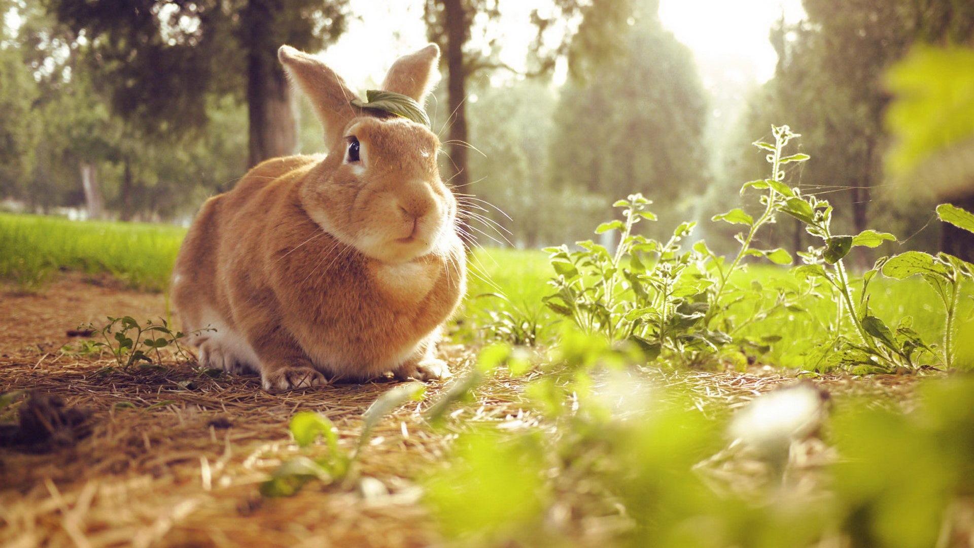 Animaux fourrure mignon fonds d 39 cran lapin hd 13 for Fond ecran animaux hd