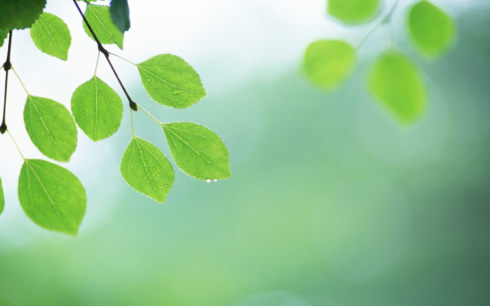 frescas hojas de papel tapiz verde 2 3 1920x1200