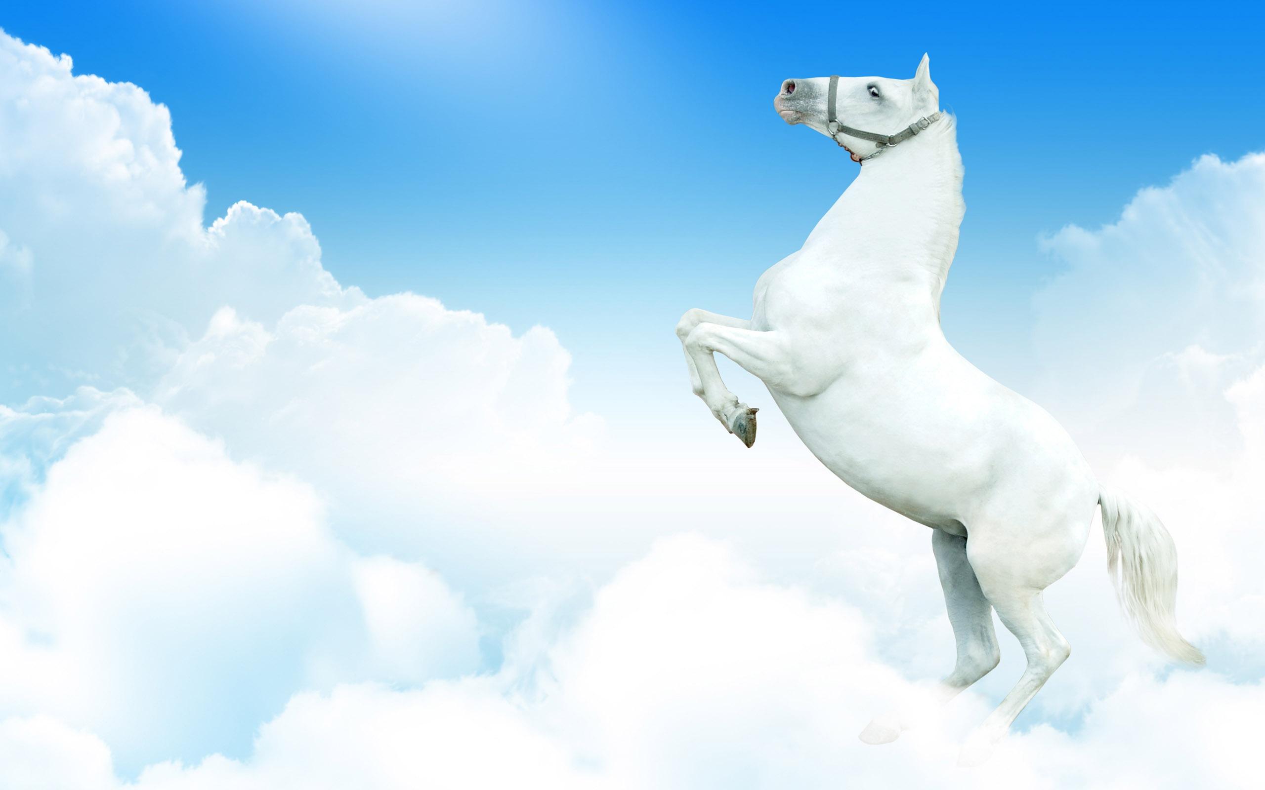 Super Horse Photo Wallpaper 2 7 2560x1600 Wallpaper Download
