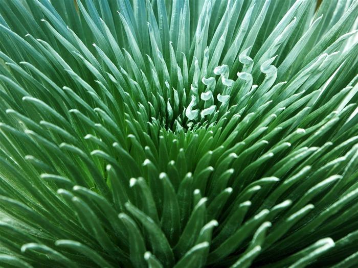 Plantas fondos de color verde hoja 7 fondo de pantalla - Color verde hoja ...