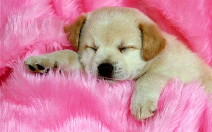 Fondos de pantalla de perros - Imagui