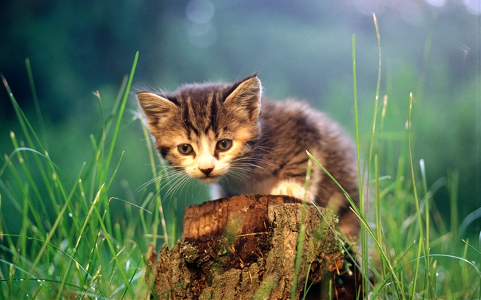 HD wallpaper cute cat photo #28