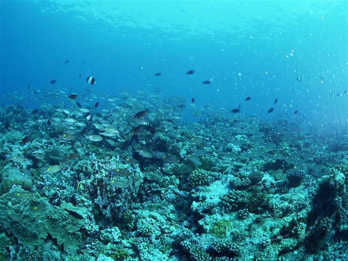 深蓝海底世界壁纸