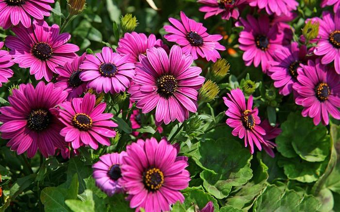 Hermosas Flores De Caléndula Fondos De Pantalla #2