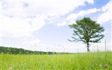 Green Grass wallpaper (2) #1