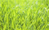 Green Grass wallpaper (2) #3