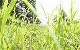 Green Grass wallpaper (2) #5
