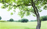 Green Grass wallpaper (2) #7