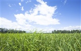 Green Grass wallpaper (2) #9