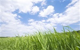 Green Grass wallpaper (2) #10