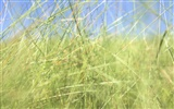 Green Grass wallpaper (2) #12