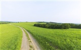 Green Grass wallpaper (2) #18