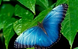 Butterfly Photo Wallpaper (2) #1
