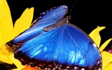 Butterfly Photo Wallpaper (2) #2