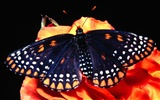 Butterfly Photo Wallpaper (2) #3