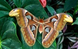 Butterfly Photo Wallpaper (2) #4