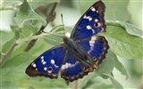 Butterfly Photo Wallpaper (2) #6