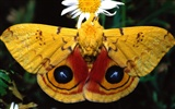 Butterfly Photo Wallpaper (2) #7