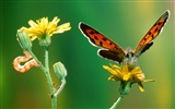 Butterfly Photo Wallpaper (2) #9