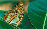 Butterfly Photo Wallpaper (2) #10