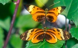 Butterfly Photo Wallpaper (2) #12