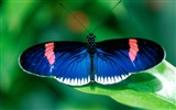 Butterfly Photo Wallpaper (2) #13