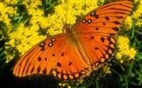 Butterfly Photo Wallpaper (2) #14