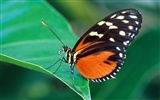 Butterfly Photo Wallpaper (2) #15