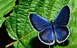 Butterfly Photo Wallpaper (2) #17