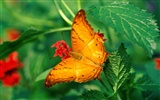 Butterfly Photo Wallpaper (2) #19