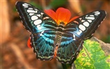 Butterfly Photo Wallpaper (2) #20